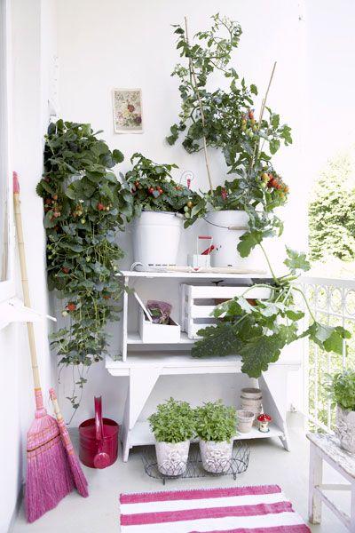 pekne-byvat-balkon-sadenie