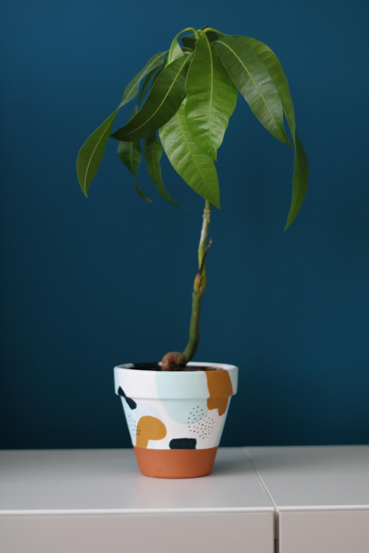 ako-si-vypestovat-mango-rastlinku-peknebyvat.sk